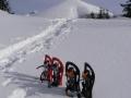 sněžnicová momentka
